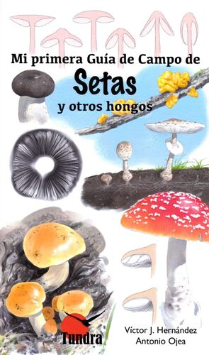 MI PRIMERA GUIA CAMPO DE SETAS Y OTROS HONGOS